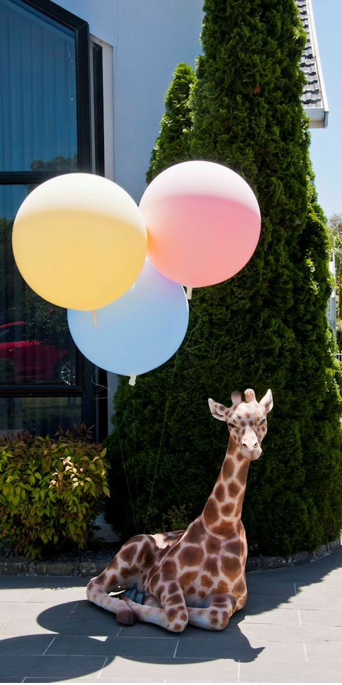giraffe with balloons harvey L